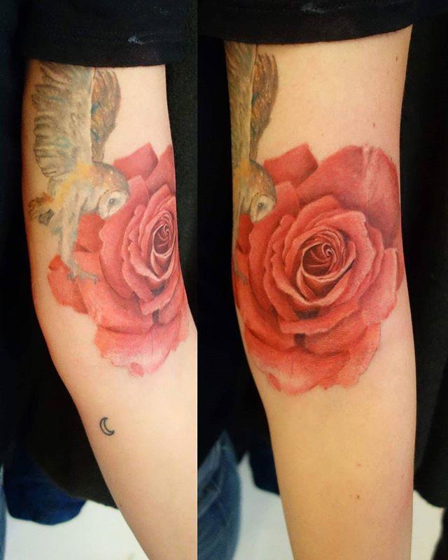 Fresh rose, healed owl by
