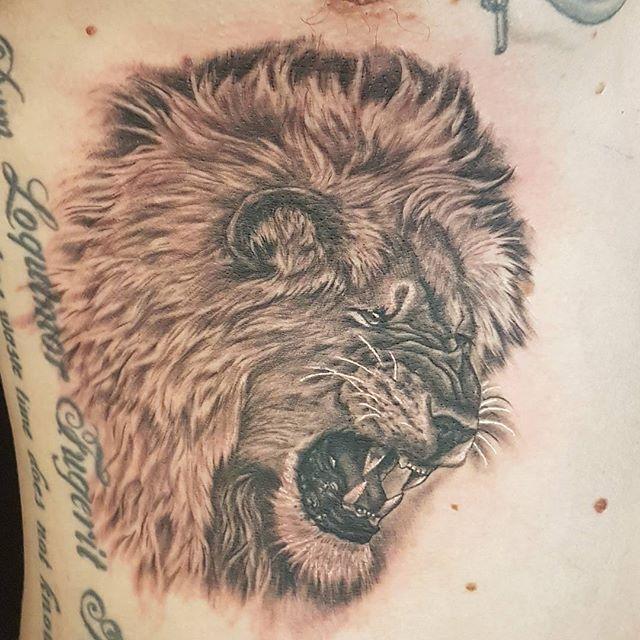 Lion in by  @joshhingston11.